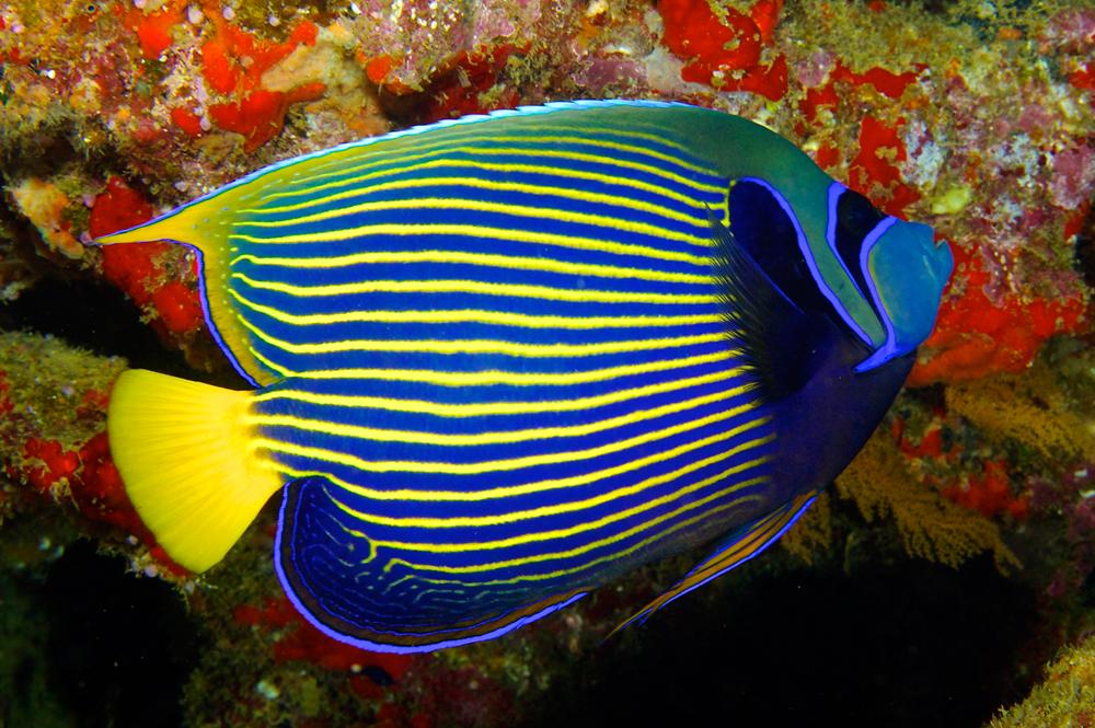 картинки экзотических рыб с названиями риелтор работе